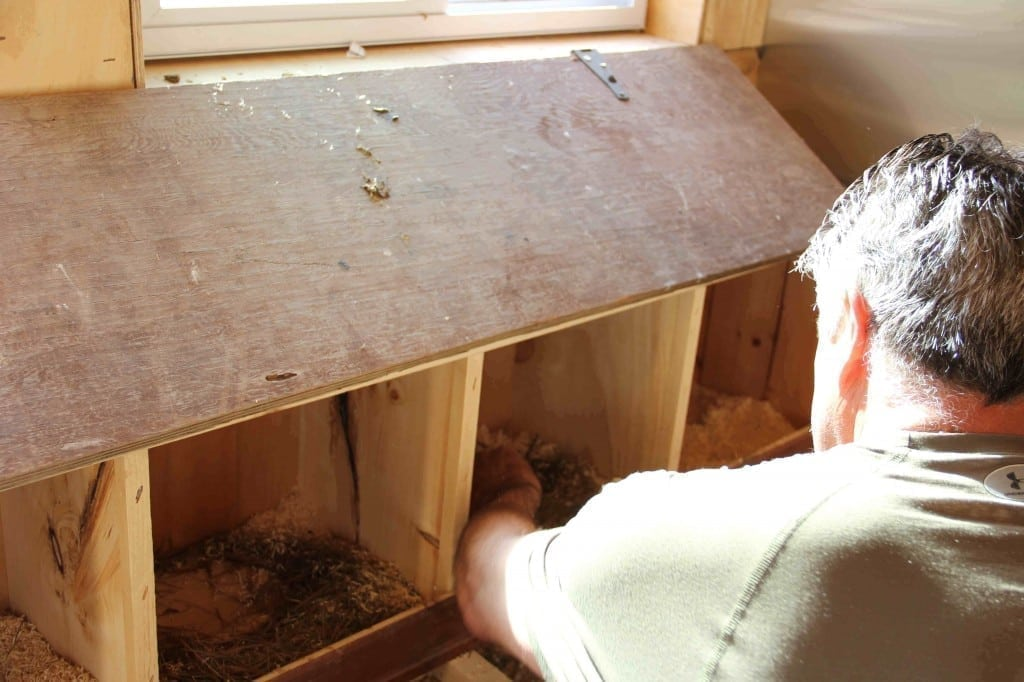what to use for your nest boxes