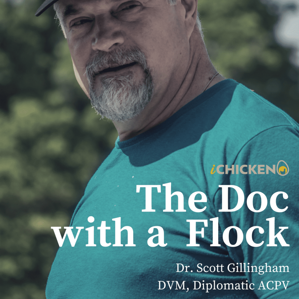 the doc with a flock ichicken book